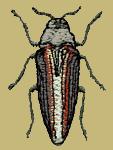 Buprestid Beetle Embroidered Cap