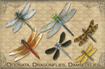 "Vintage Odonata 2"" X 3"" Magnet"