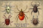 "Vintage Acari 2"" X 3"" Magnet"