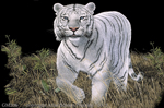 "White Tiger 2"" X 3"" Magnet"