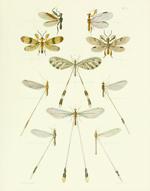 TOI PL 33 Wood Wasps Reproduction Print