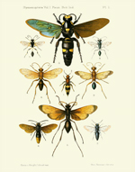 FOI Hymenoptera Vol 1 PL 1 Reproduction Print