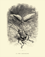 The Insect PL II - The Microscope Reproduction Print