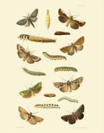 EMNZE PL X Moths Reproduction Print