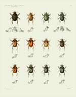 AKAW Taf I Beetles Reproduction Print