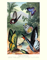 Brehms Tierleben BF & Beetles Pond Reproduction Print