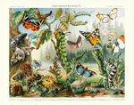MKL Camouflage II Insects Reproduction Prints