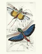 NL PL 16 Locusts Reproduction Prints