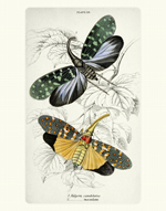 NL PL 23 Lantern Fly Reproduction Prints