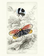 NL PL 24 Tree Hoppers Reproduction Print