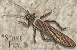 "Stone Fly 2"" X 3"" Magnet"