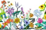 """Vintage Wildflowers 2"""" X 3"""" Magnet"""