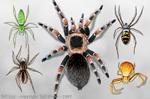 """Spider Wrap 2"""" X 3"""" Magnet"""