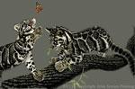 """Clouded Leopard Pair 2"""" X 3"""" Magnet"""