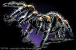 """Tarantula 2"""" X 3"""" Magnet"""