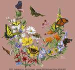 Butterflies of NA Ladies Scoop-Neck Tee