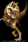 """T-Rex Skeleton 2"""" X 3"""" Magnet"""