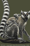 "Ring-tailed Lemurs 2"" X 3"" Magnet"