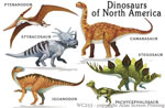 "Dinosaurs of NA 2"" X 3"" Magnet"