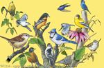 "Garden Birds 2"" X 3"" Magnet"