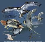 Birds of Prey Adult T-shirt