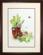 Carnivorous Plants Framed Print