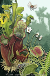 """Carnivorous Plants 2"""" X 3"""" Magnet"""