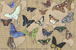 "Butterflies of the World 2"" X 3"" Magnet"