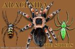 """Arachnida 2"""" X 3"""" Magnet"""