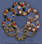 Snake Knot Adult T-shirt