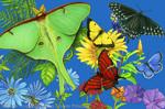 "Butterfly Spectrum 2"" X 3"" Magnet"