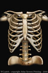 "Skeleton 2"" X 3"" Magnet"