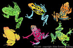"Frog Glow 2"" X 3"" Magnet"