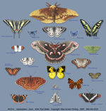 Lepidoptera Adult T-shirt - Back