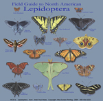 Lepidoptera Adult T-shirt