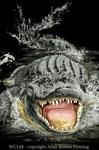 "Gator Encounter 2"" X 3"" Magnet"