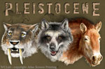 """Pleistocene 2"""" X 3"""" Magnet"""
