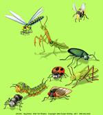 Bug Patrol Youth T-shirt