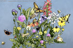 "Roadside Wildflowers 2"" X 3"" Magnet"