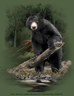 Bear Creek Adult T-shirt