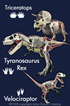 "Dino Anatomy 2"" X 3"" Magnet"