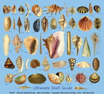 Ultimate Seashell Guide Adult T-shirt
