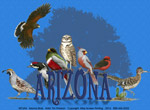 Arizona Birds Adult T-shirt