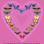 Butterfly Sweetheart Ladies Scoop-Neck T