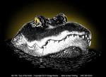 Eye of the Gator Adult T-shirt