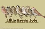 """Little Brown Jobs 2"""" X 3"""" Magnet"""