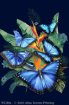 "Butterfly Paradise 2"" X 3"" Magnet"