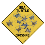 Sea Turtle Babies Crossing